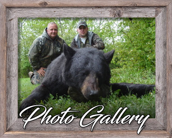 Davis Point Lodge and Outfitting Ltd. Photo Galleries